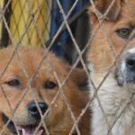 ZERGportal: Hundevermittlung und Katzenvermittlung mit Herz und Verstand