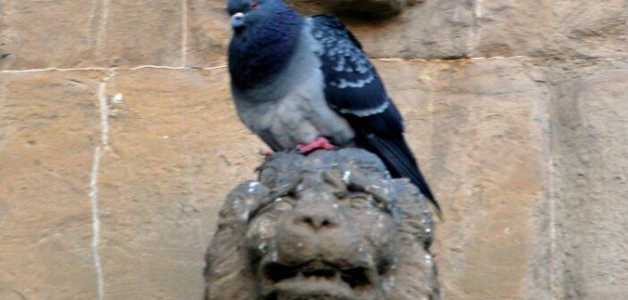 Taubenplage: Lochbleche sind letzte Rettung der Bahn