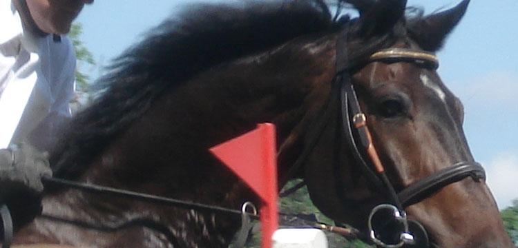 Gummimatte: Pferdepflege beginnt beim Bodenbelag