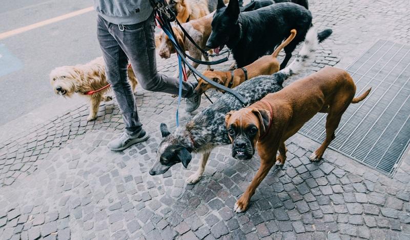 Kugelschreiber zusammenbauen kann man sich sparen, Hunde-Betreuung ist ein realer Nebenjob und macht auch noch Spaß! (#06)